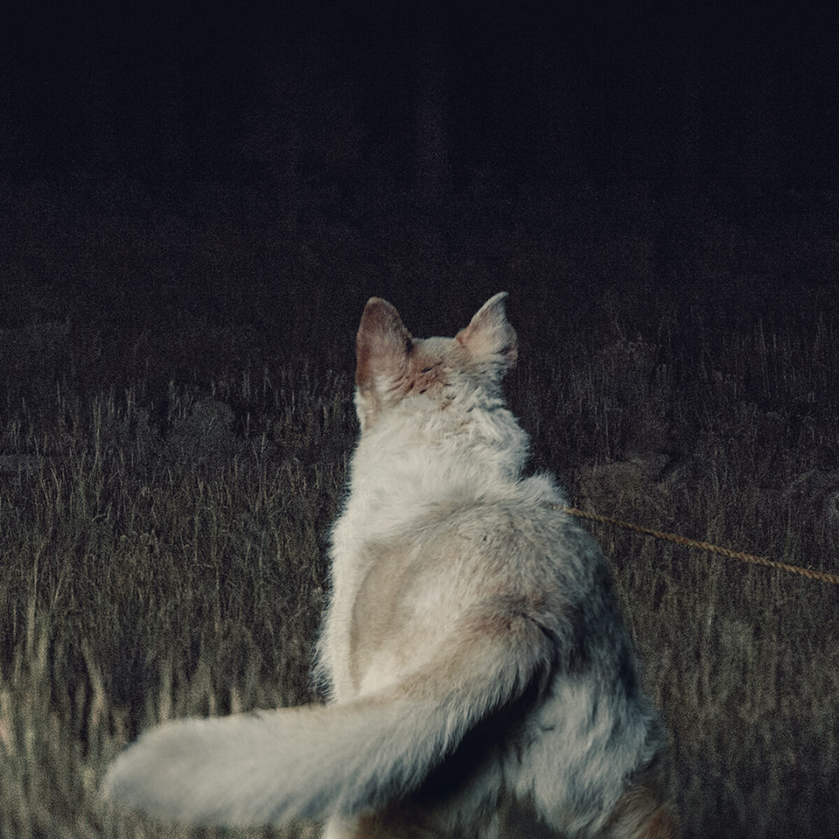 It Comes At Night Teaser Square