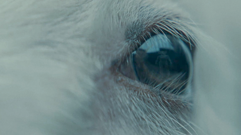 Lamb Trailer Thumbnail Clean